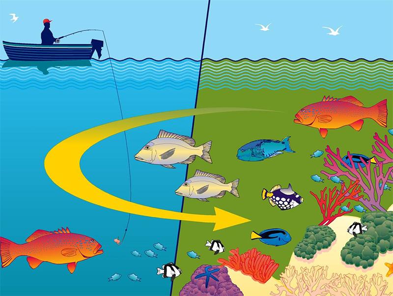 Spillover effect Marine Parks