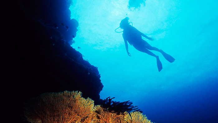 Diving on the Great Barrier Reef.